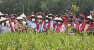ধান চাষে দেশে নতুন কৃষি বিপ্লব ঘটবে: কৃষিমন্ত্রী